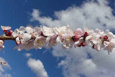 foto-floración-scroll-01