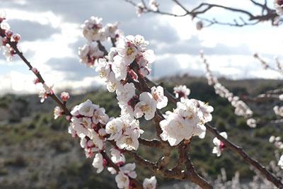 foto-floración-scroll-02