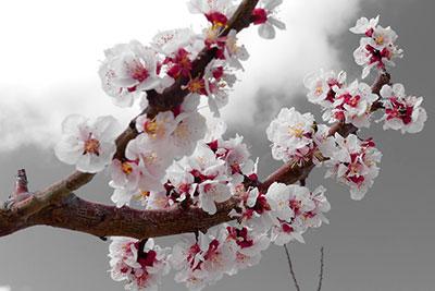 foto-floración-scroll-03