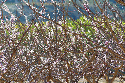 foto-floración-scroll-04
