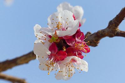 foto-floración-scroll-06